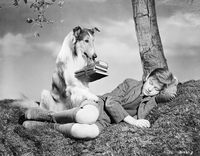Publicity shot of Roddy McDowall as Jo Carraclough and Lassie, with books in mouth, under tree.