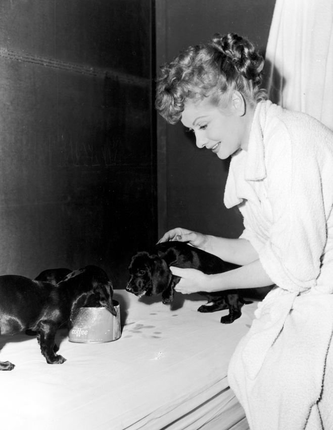 Lucille Ball as Tacy Collini feeding a litter of puppies during shooting of The Long, Long Trailer