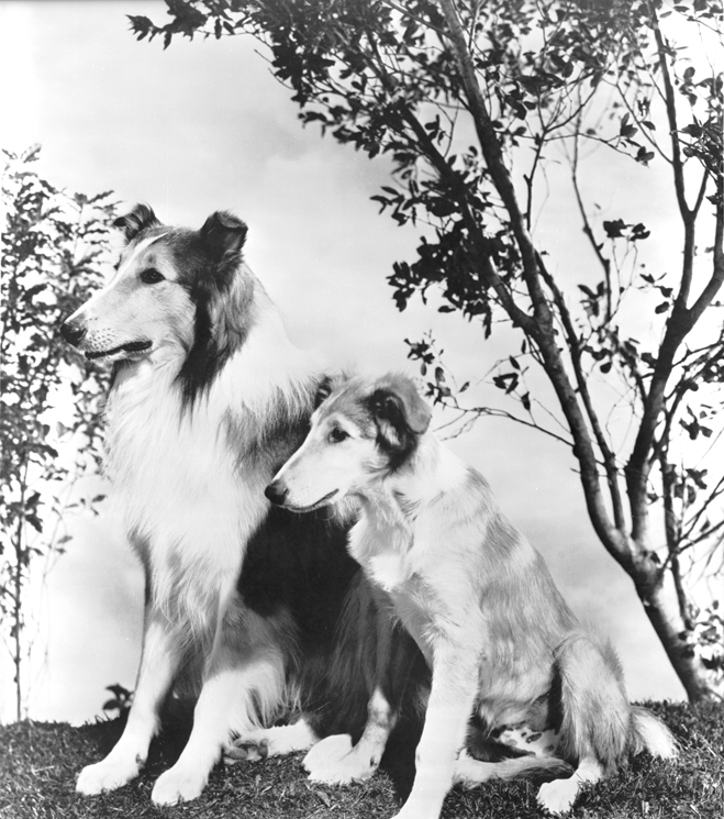 Full publicity shot of Lassie with son/puppy.