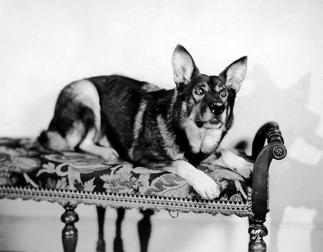 Rin Tin Tin - The Show of Shows